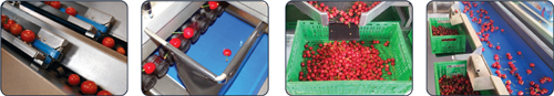 calibratrice elettronica_small fruit sorter3.jpg